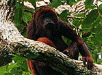 Brazil Amazon RSA THUMB