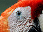 Costa Rica AMMA THUMB