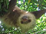 Costa Rica AMOP THUMB