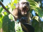 amazon-monkey2