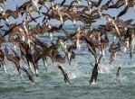 galapagos-birds-dive