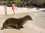 galapagos-excursion-seals2