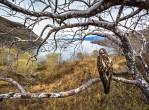 galapagos-landscape-hawk