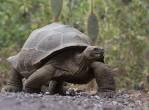 galapagos-tortoise2