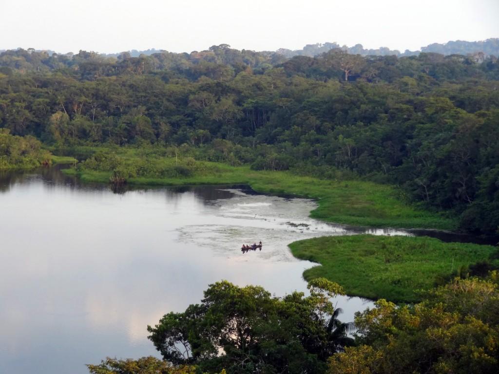 Canoeing With Caimans In Ecuador S Yasuni National Park