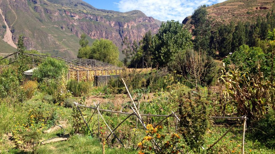 Manu Wildlife Center_Andean farmstead