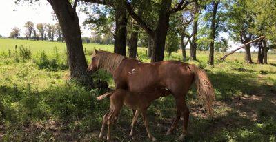 Estancia El Ombu_horses (photo credit El Ombú de Areco)
