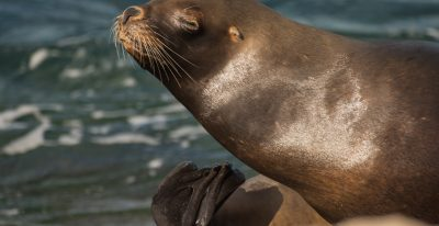 Bahia Bustamante_sea lions (photo credit Wendy Pasop)