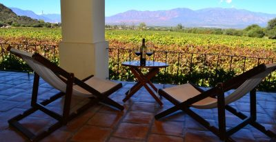 Cafayate Wine Resort_vineyard