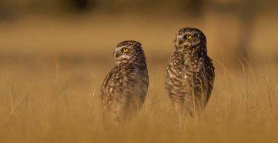 Estancia Rincon Chico_owls