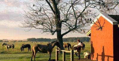 La Bamba_horses
