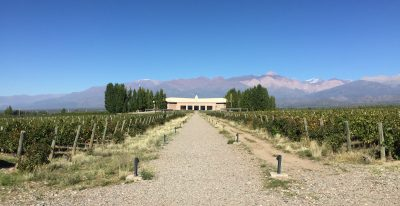 Mendoza - Saletein Winery