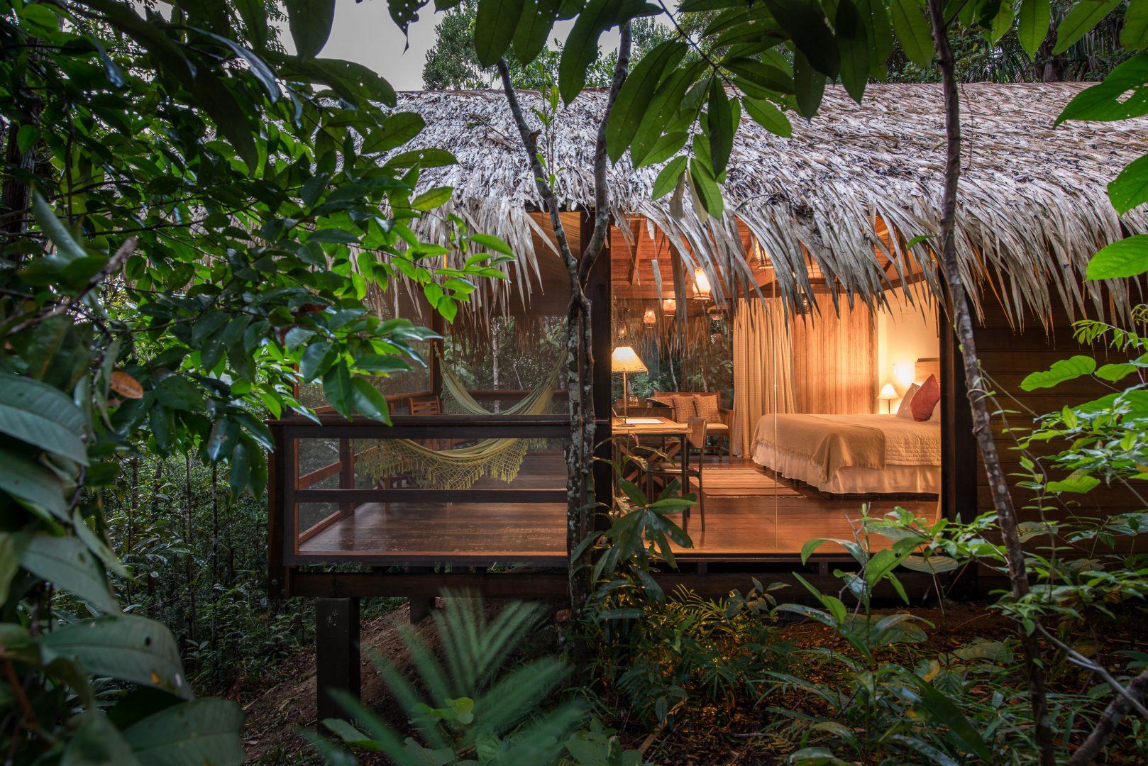 Amazon Jungle Images