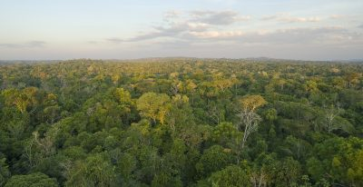 Amazon rainforest canopy view