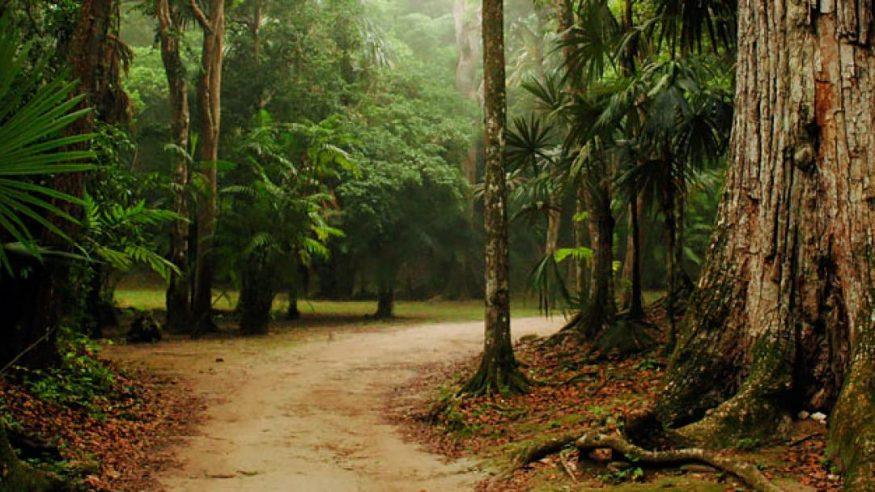Chaa Creek - Nature Preserve