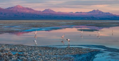 Alto Atacama_flamingos in lagoon (photo credit Michael Stolp-Smith)
