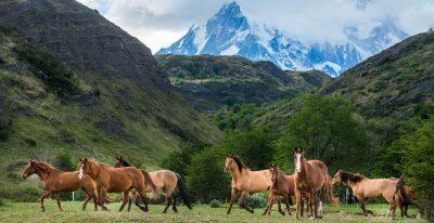 Explora Patagonia_horses