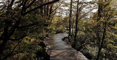 Patagonia Camp_boardwalks