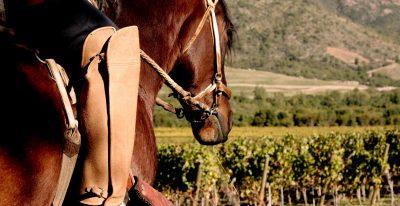 Vina Vik_Horseback Riding