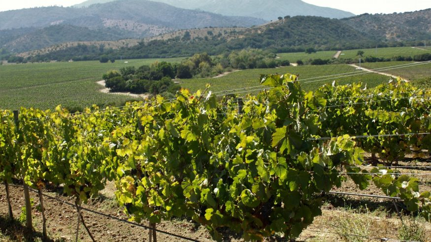 Casablanca Wine Valley