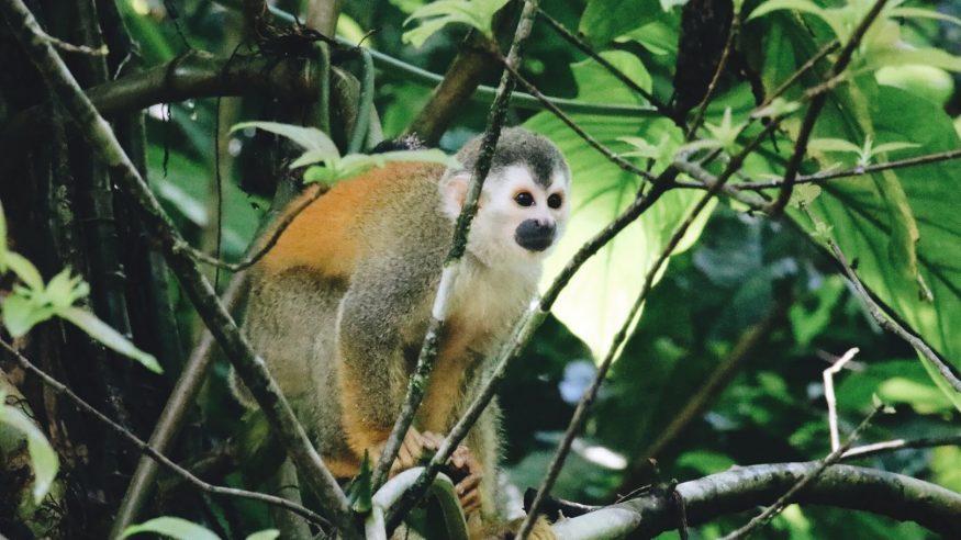Costa Rica - Manuel Antonio Wildlife