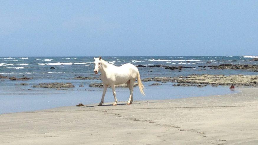 Costa Rica - Manuel Antonio Horse on Beach