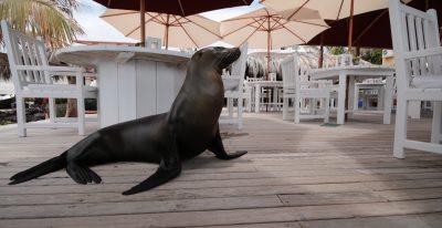 Angermeyer Waterfront Inn_dining