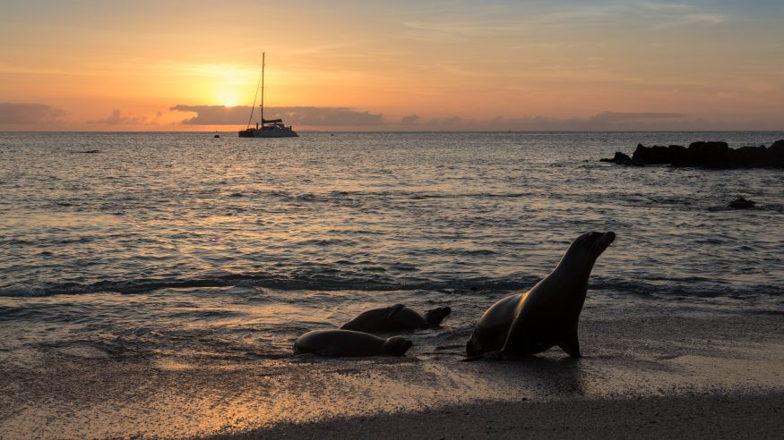 Sea lions coming out of water at sunset; boat in background