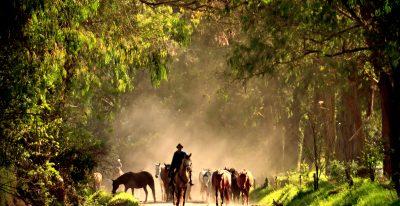 Hacienda Zuleta Horses