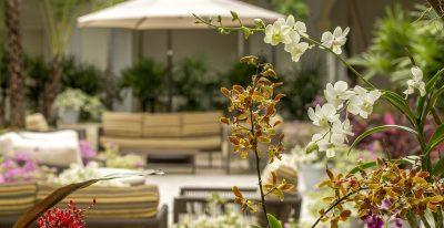 Hotel del Parque_terrace