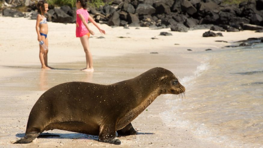 Galapagos sea lion_Photo by Max Aliaga