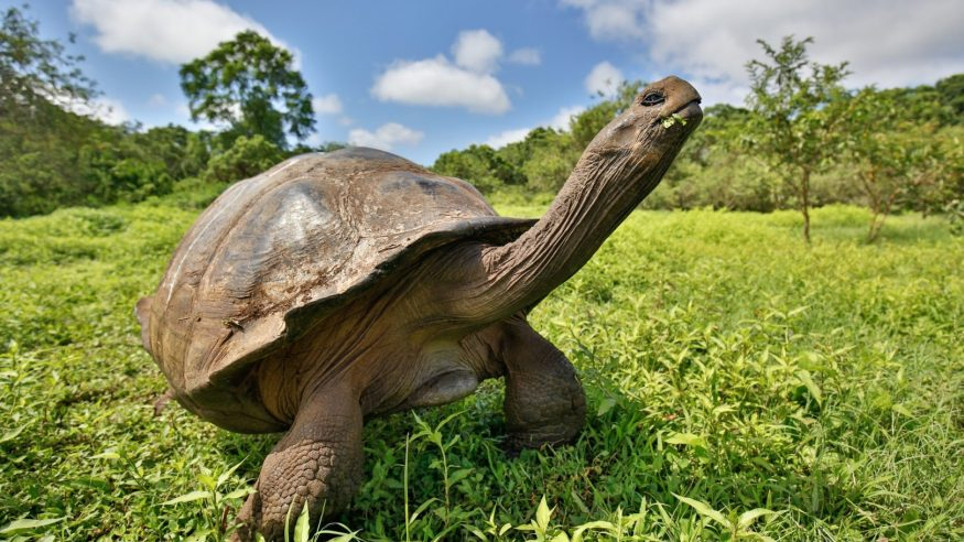 Galapagos tortoise_Photo by Max Aliaga