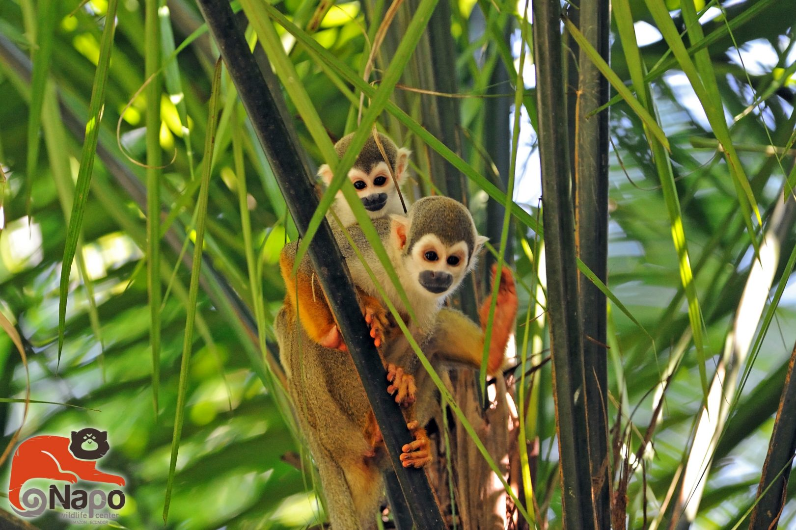 Napo Wildlife Center Vaya Adventures