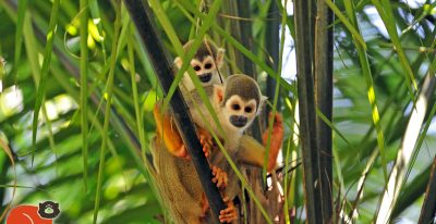 Napo Wildlife Center_monkeys