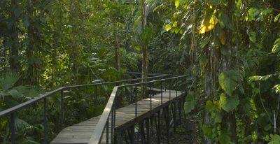 Sacha Lodge_walkway