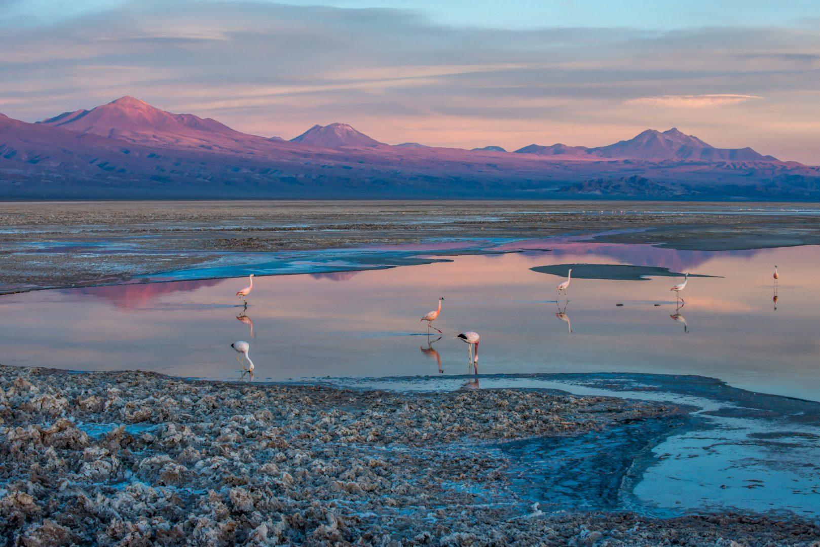 Flamingos in the desert - photo by Alto Atacama