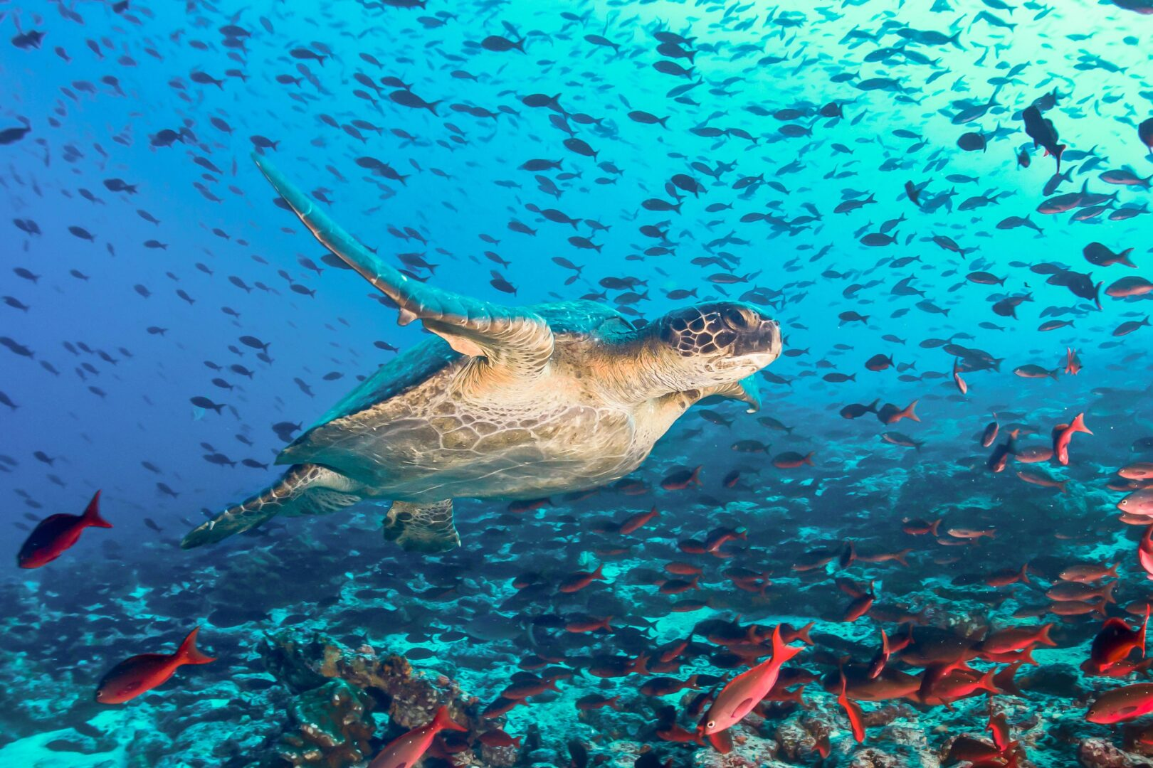 See amazing wildlife, like this sea turtle, on your Galapagos Islands cruise