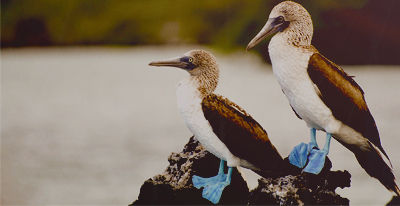 Galapagos Christmas and New Year's departures