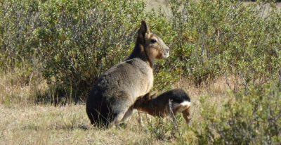 Argentina - Peninsula Valdes Wildlife