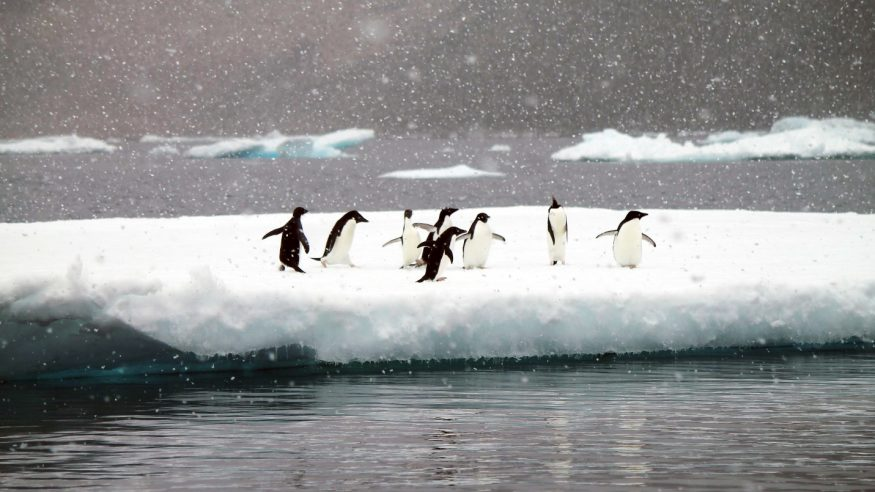 Penguins in the falling snow