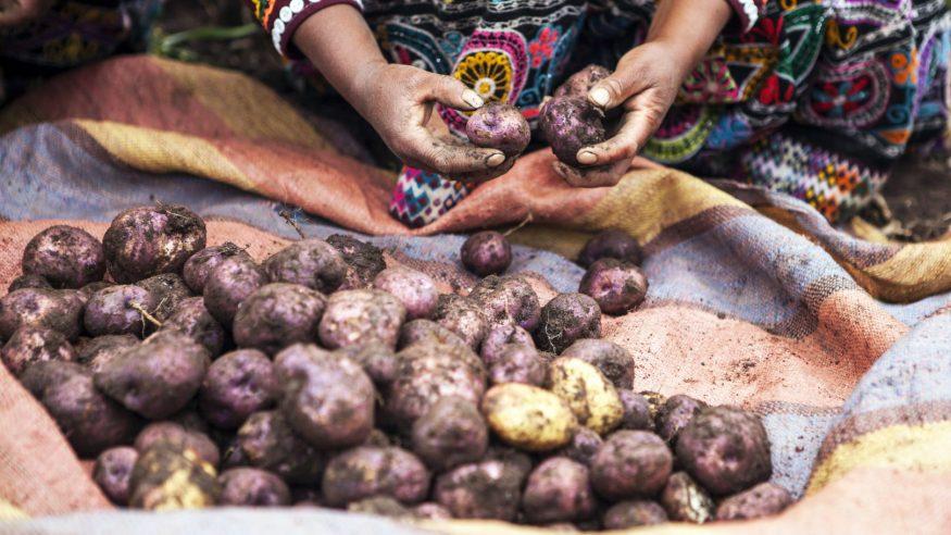 Peru_Andean potatoes