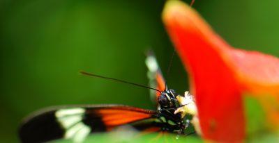 Refugio Amazonas_Butterfly
