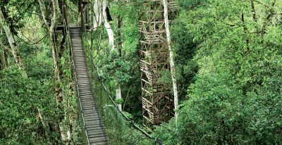 Inkaterra Reserva Amazonica_Canopy tower and walkway (photo credit Inkaterra)