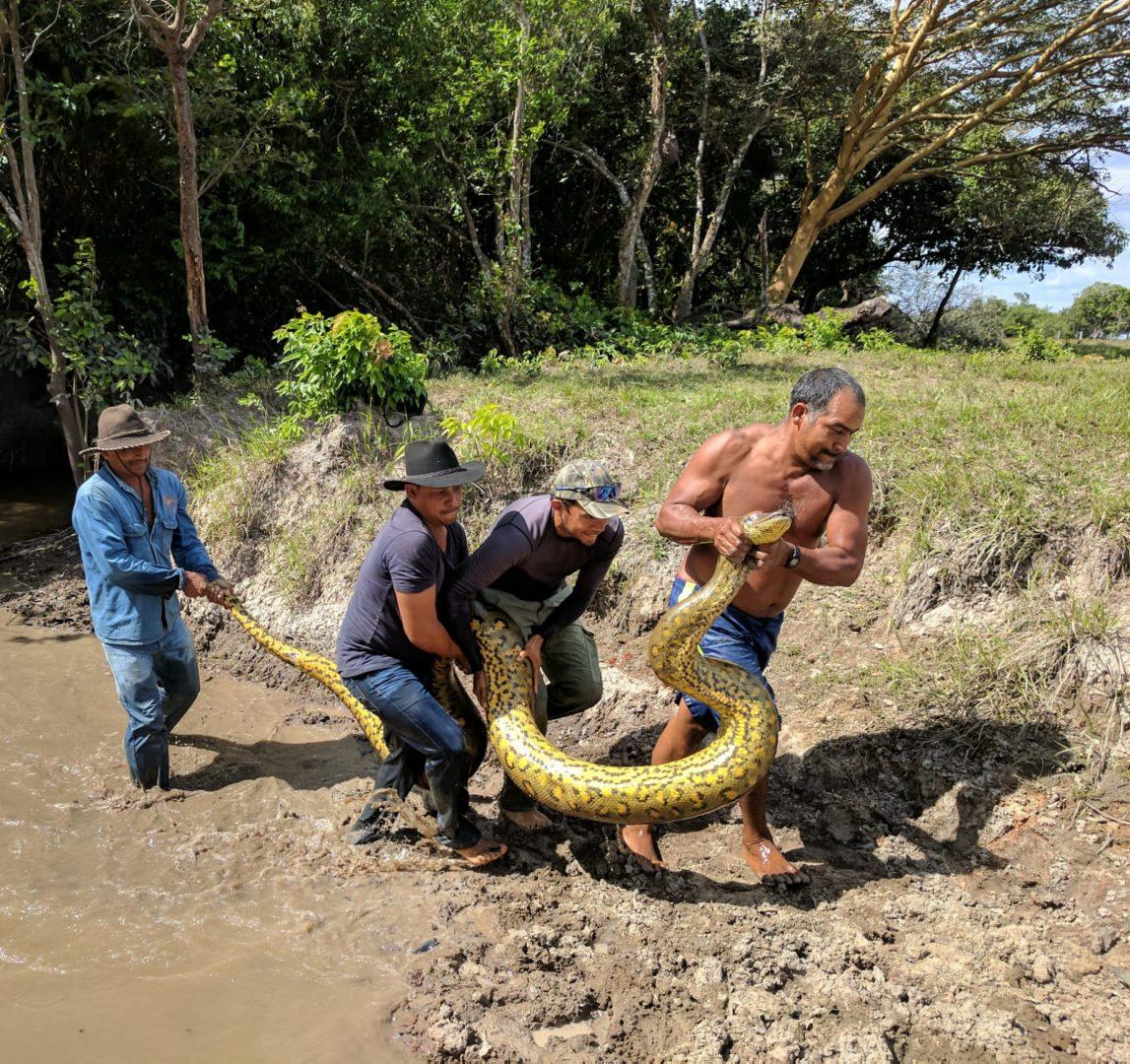 Anaconda (photo credit Nancy Engel)