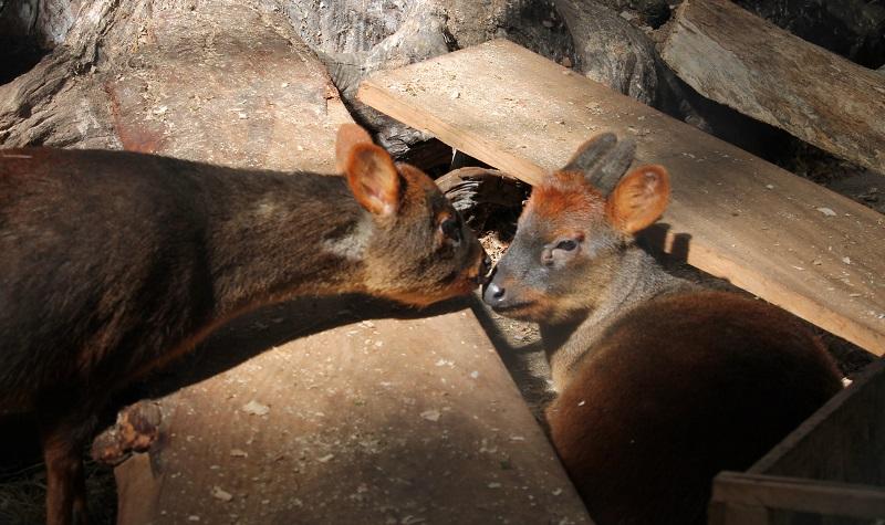 Wildlife Conservation in Senda Romahue - Vaya Adventures