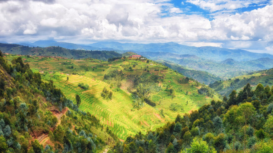 Beautiful rural landscape with agricultures terraces, Rwanda near Nyungwe National Park, Africa