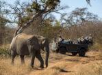 RockFig Safari Lodge_elephant