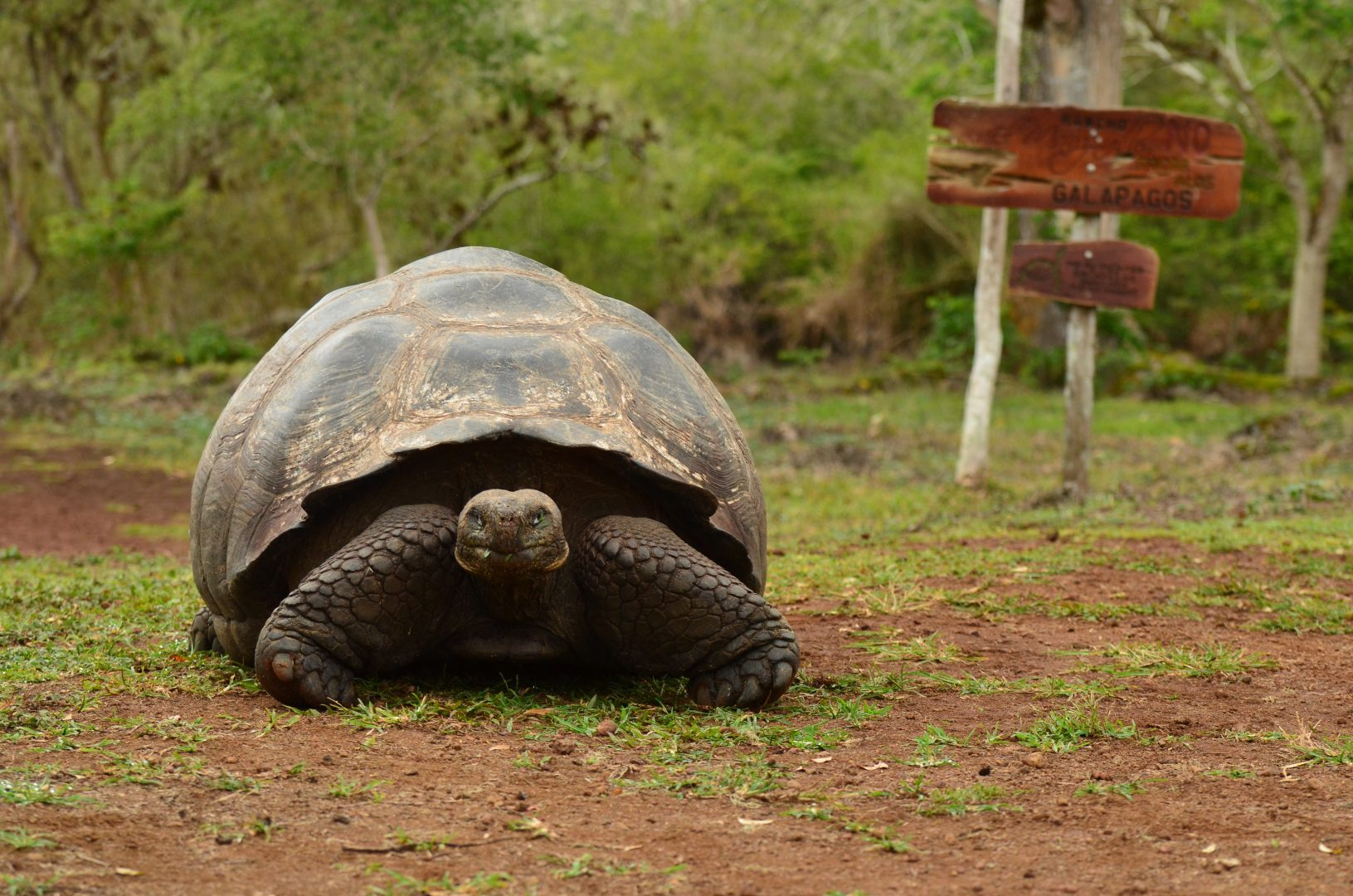 Wildlife Experiences Found Only In The Galapagos Islands