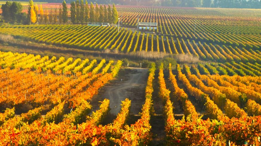 Chile - Colchagua Valley - Wine Country