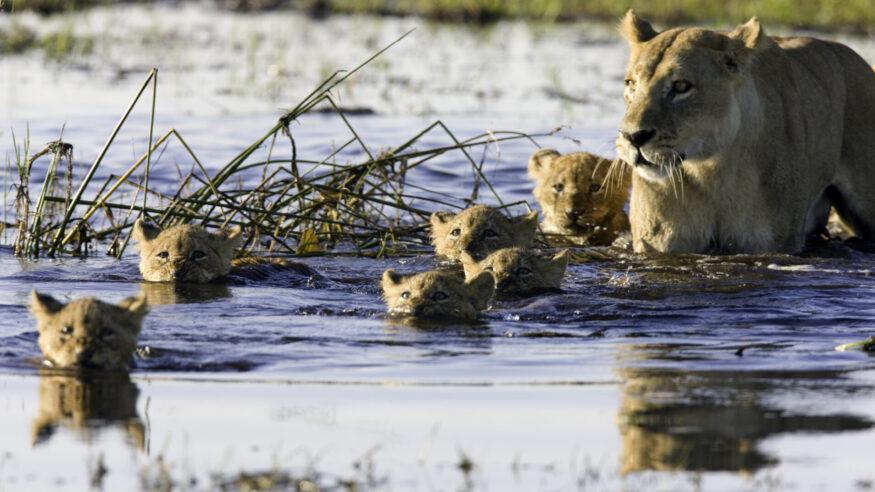 Taken in the Okavango, Botswana